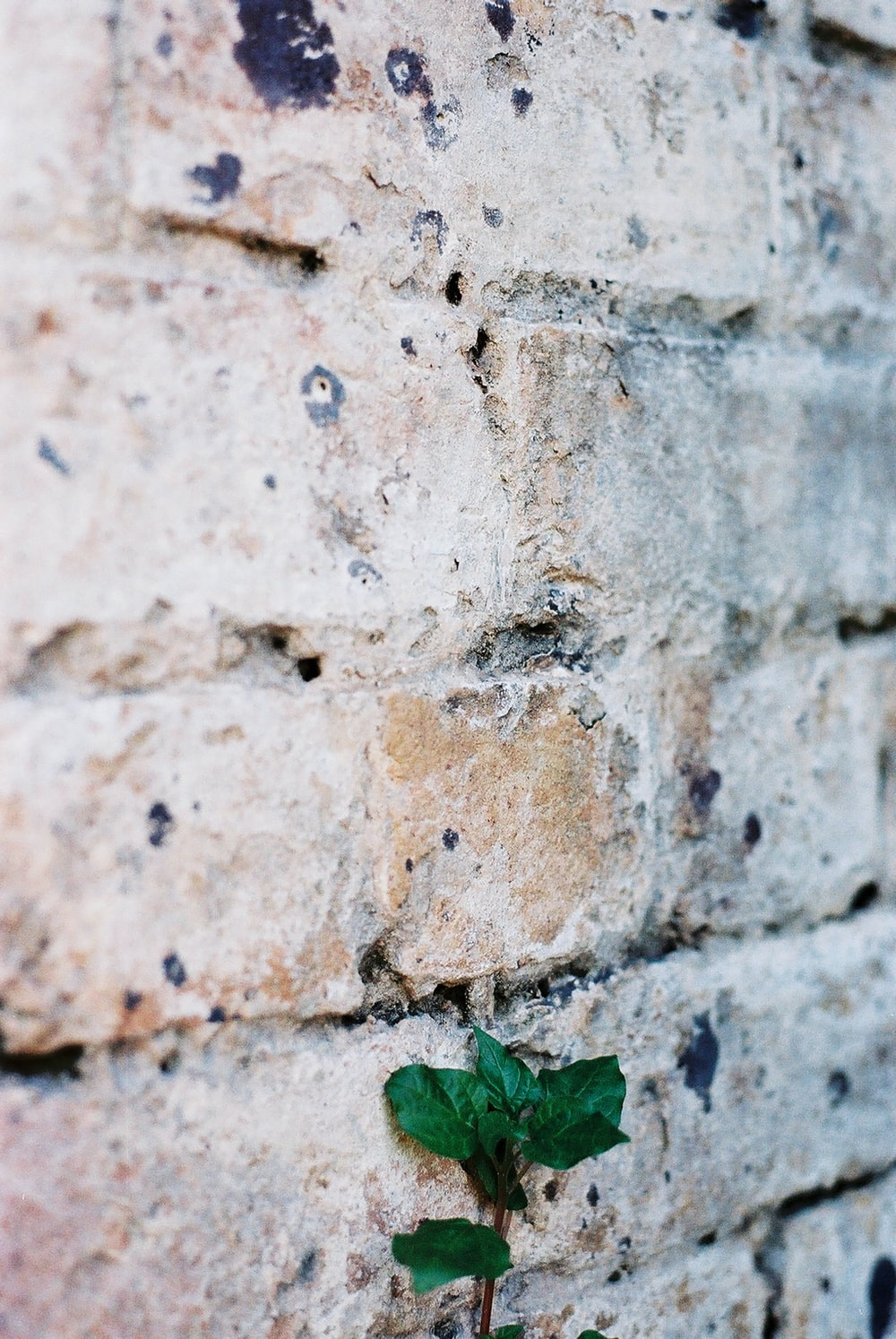green leaf on brown concrete wall