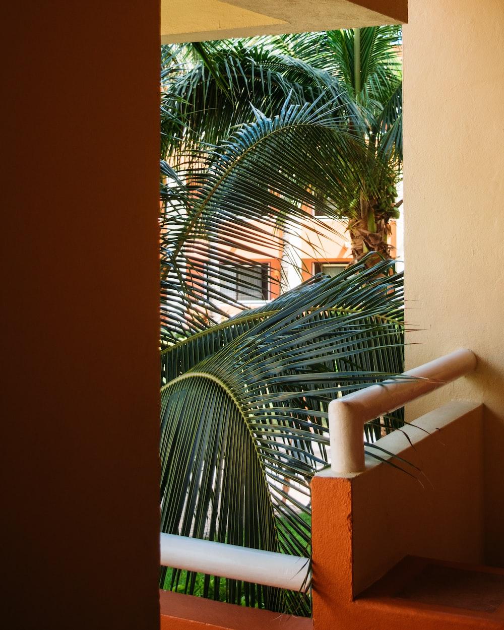 green palm tree near white metal fence