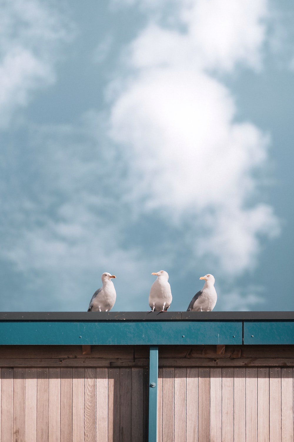 white bird on brown wooden fence under white clouds during daytime