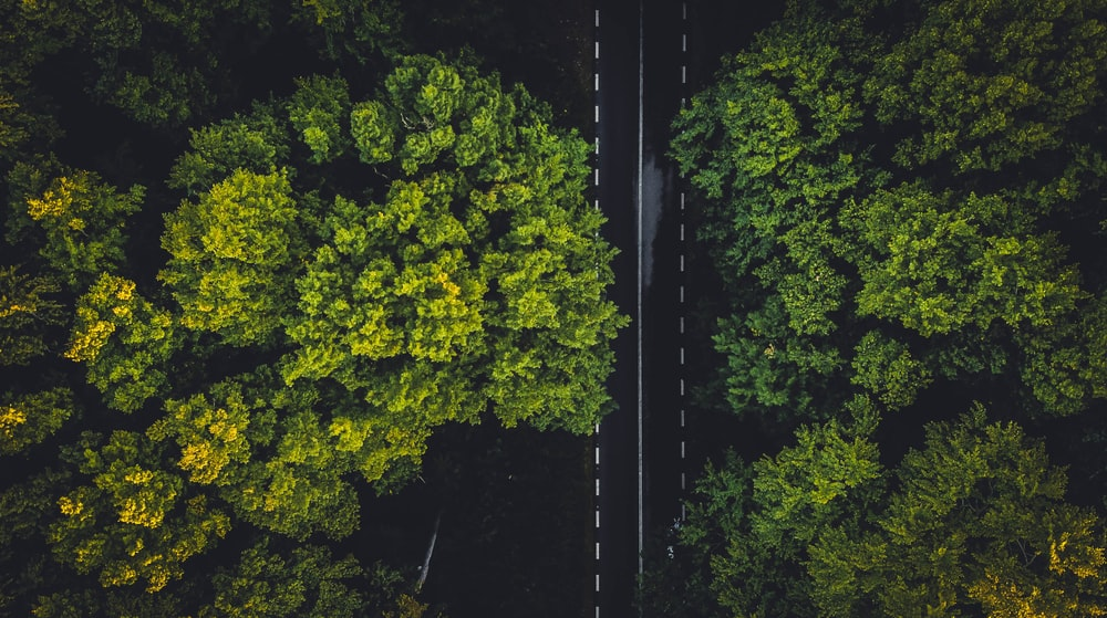 green trees on the forest during daytime