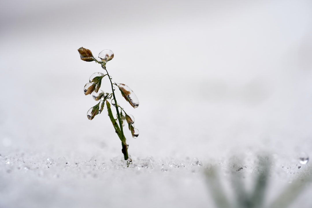 Green Plant Covered With Snow - unsplash