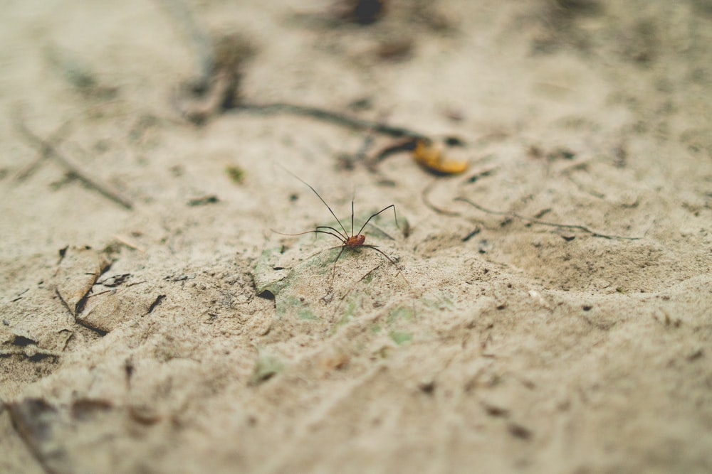 brown and black insect on brown soil