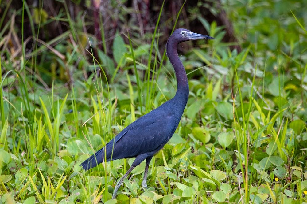 blue bird on green grass during daytime