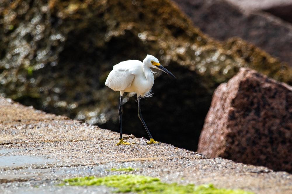 white bird on brown rock