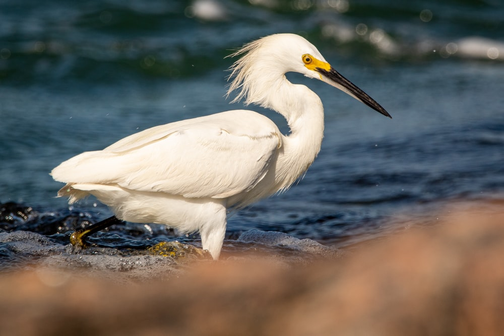 white bird on black rock near body of water during daytime