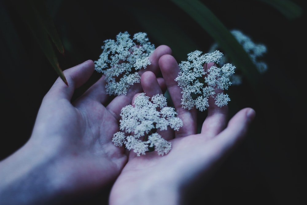white flowers on persons hand