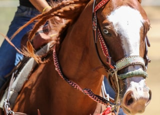 Leottie is a red paint quarterhorse with one blue eye, one brown eye.