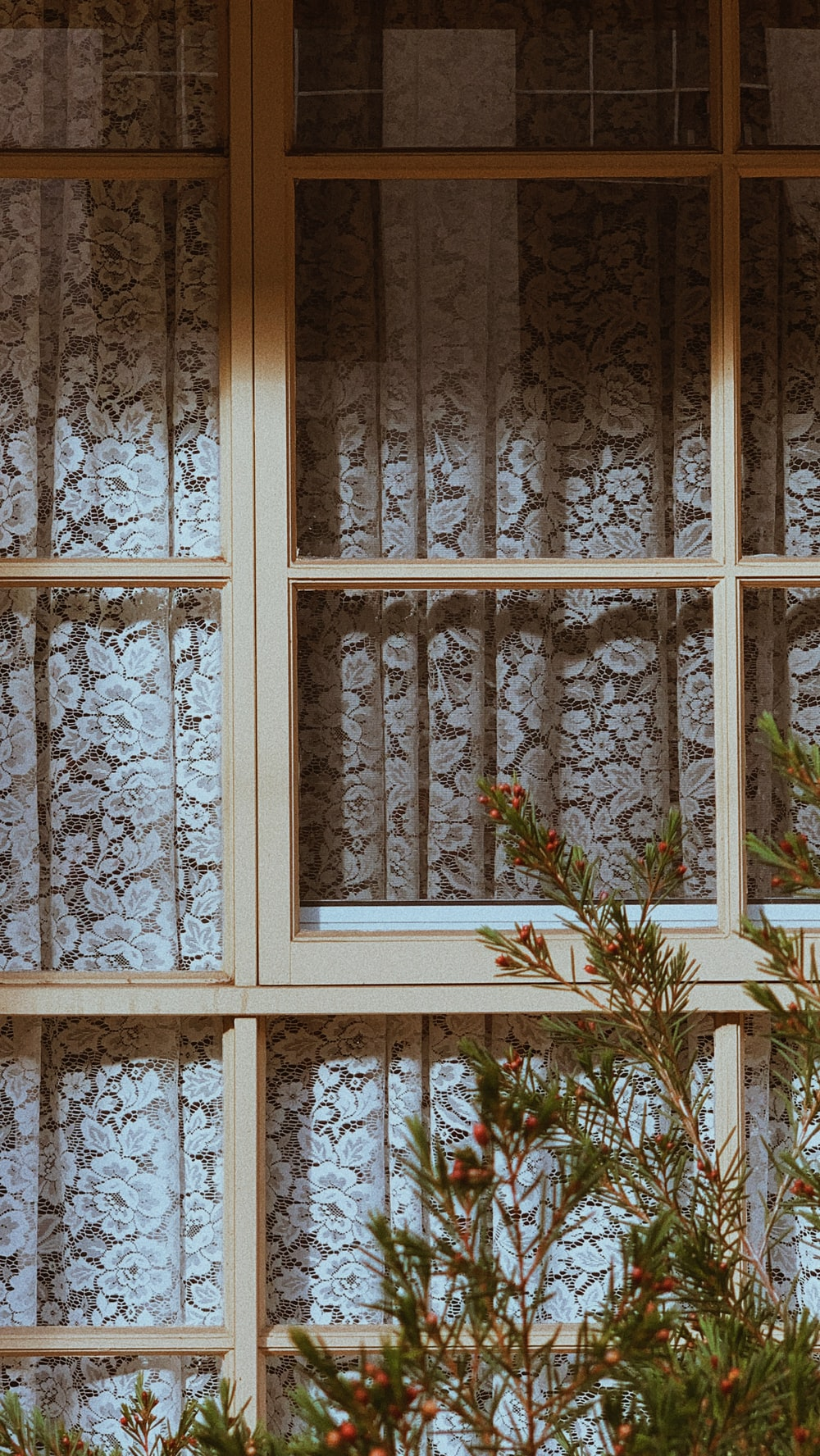 green plant on white wooden window