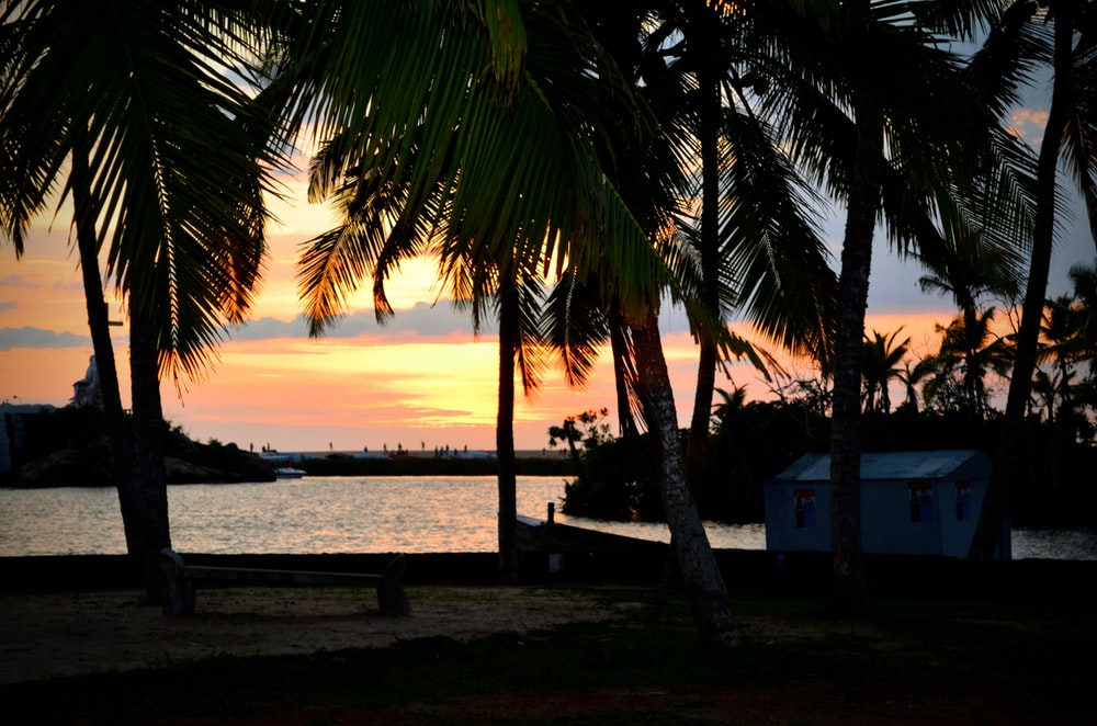 silhouette of palm tree near body of water during sunset