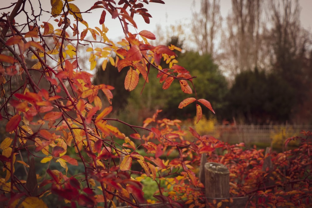 red leaves on brown wooden post