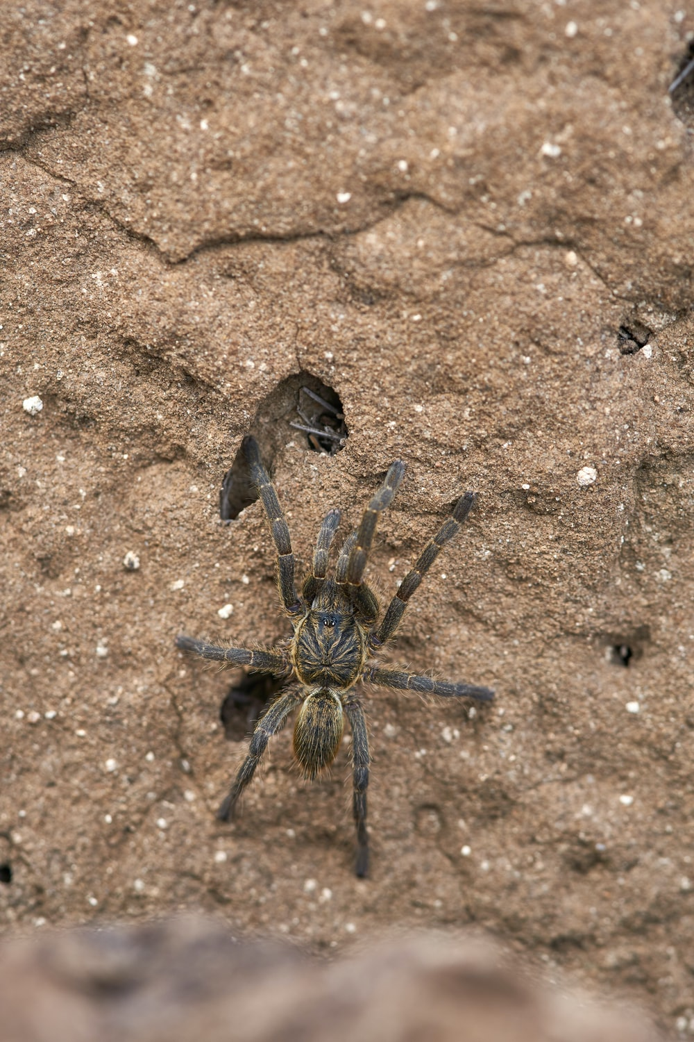 black and brown spider on brown sand