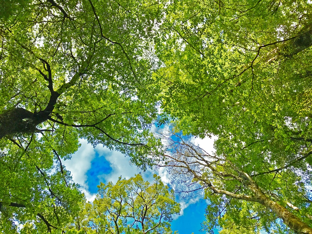 green tree under blue sky and white clouds during daytime
