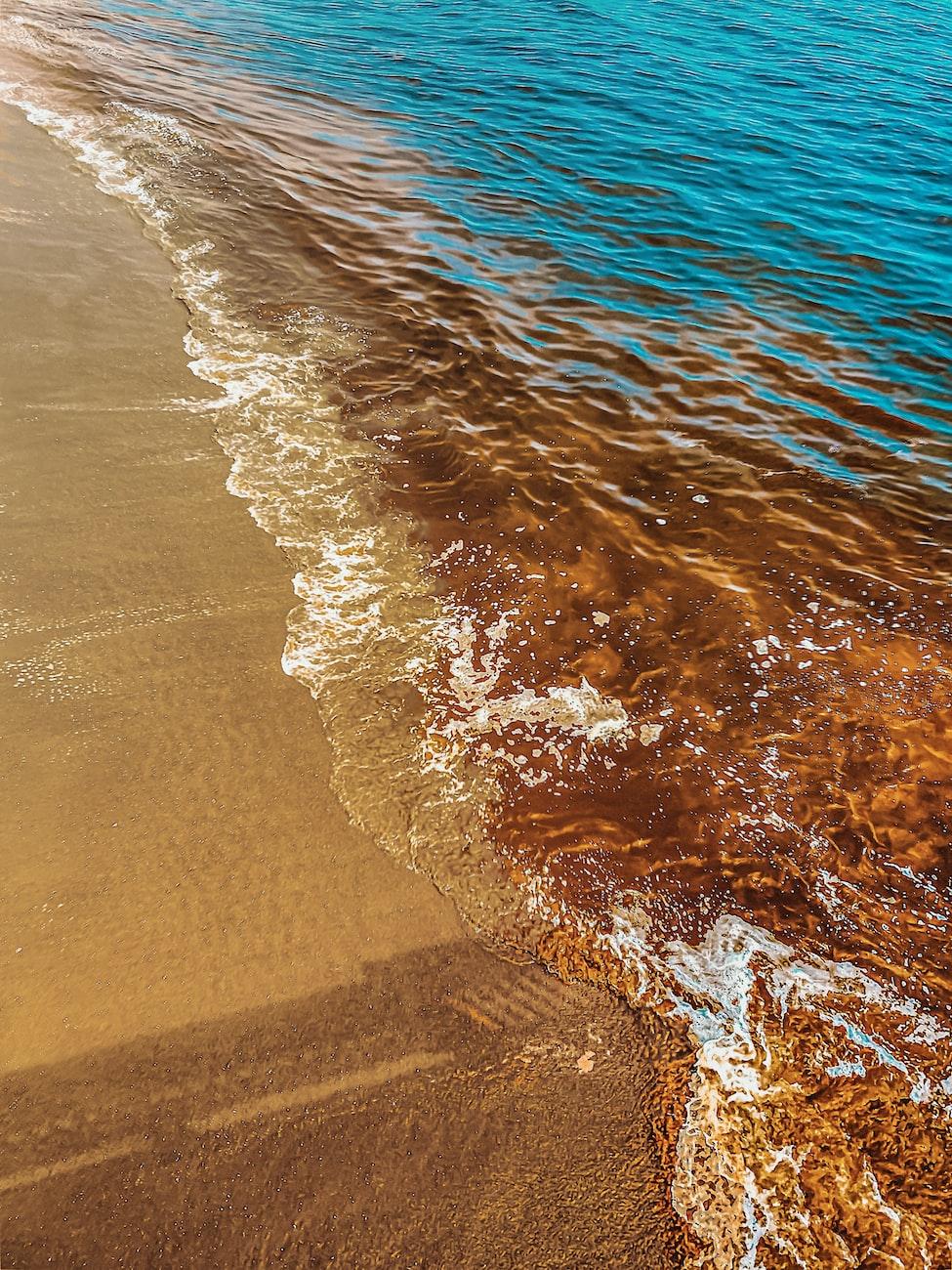 red tide in Virginia Beach