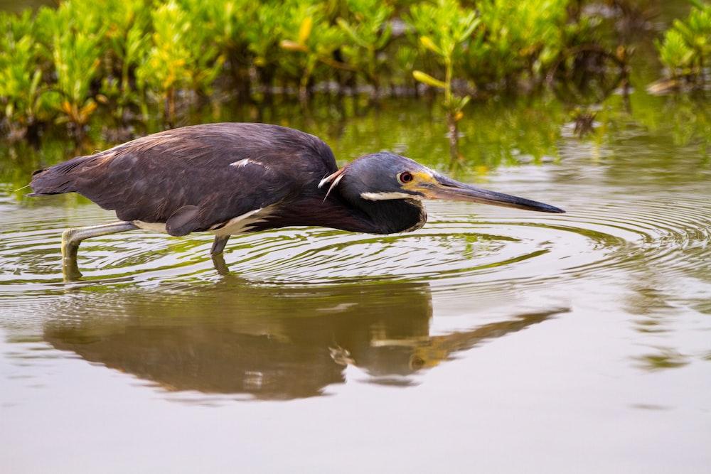 black bird on water during daytime