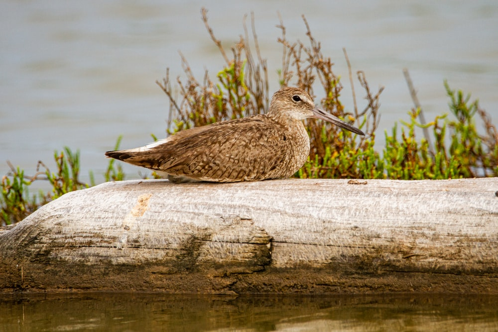 brown bird on brown wood log