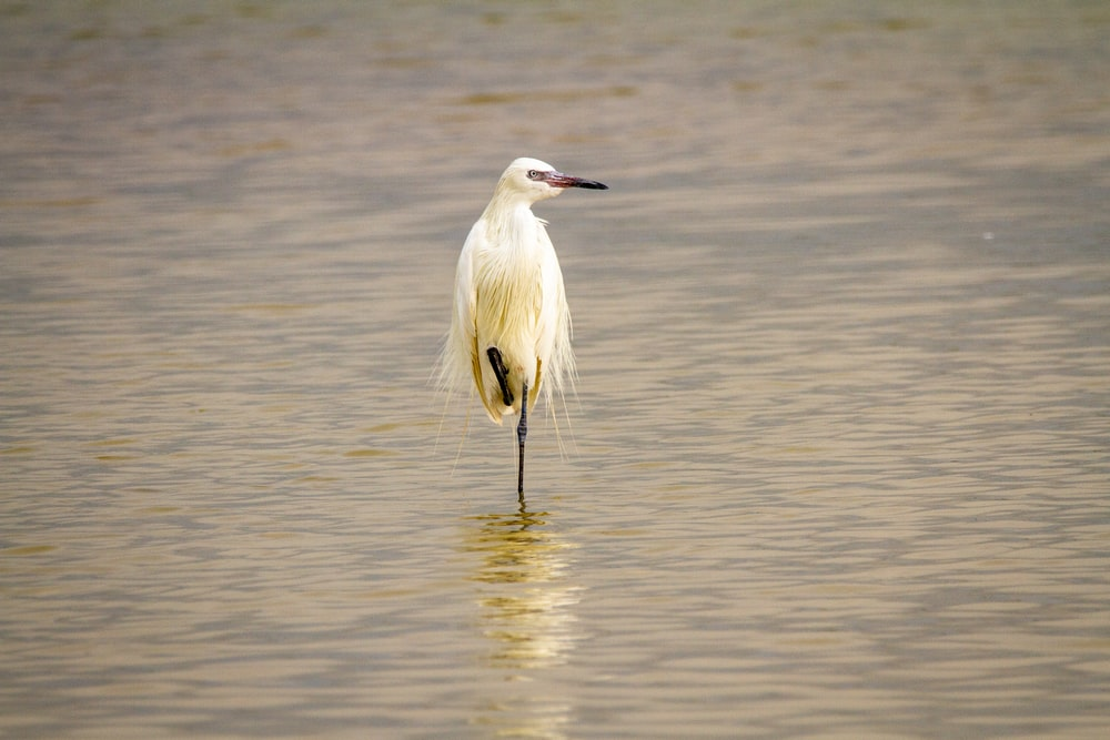 white stork on water during daytime