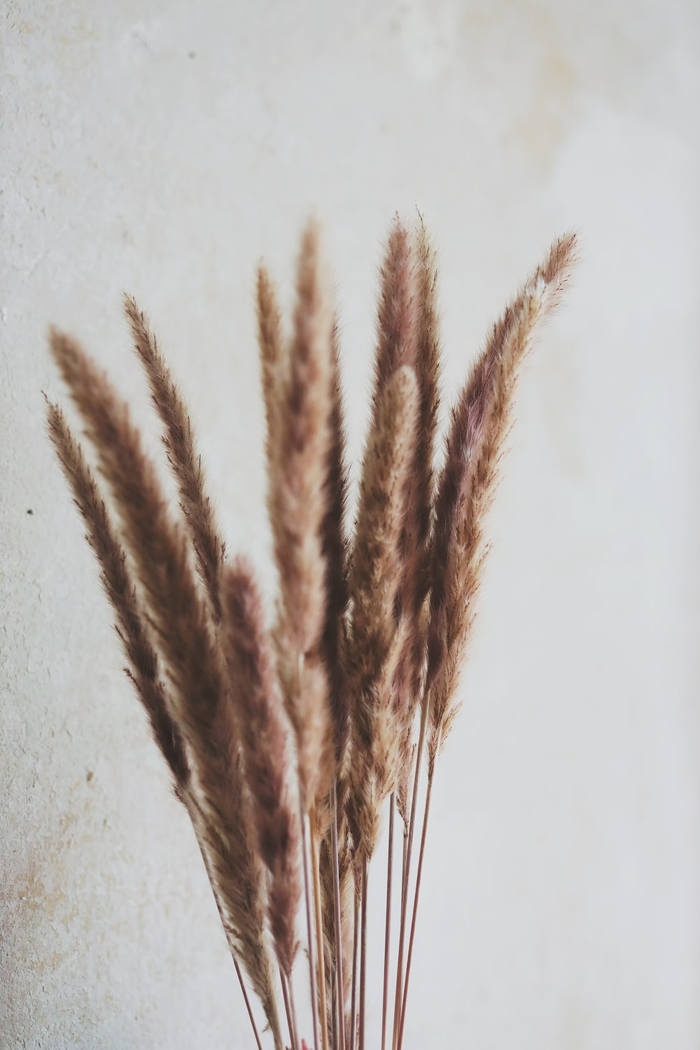 brown wheat on white surface