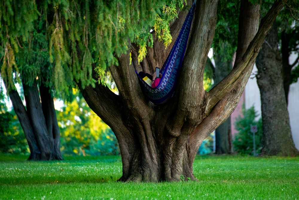 blue and black shoe under brown tree trunk