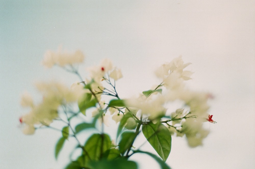 white and red flower in tilt shift lens