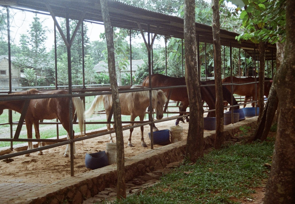 brown cow in cage during daytime