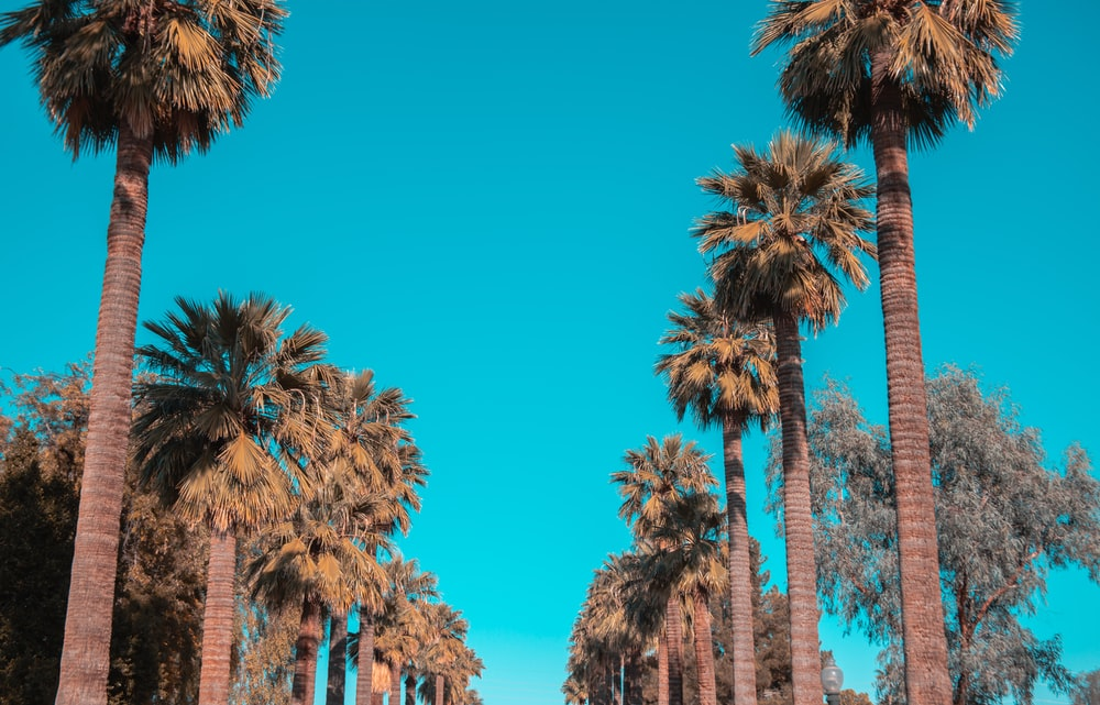 green palm trees near brown concrete building during daytime