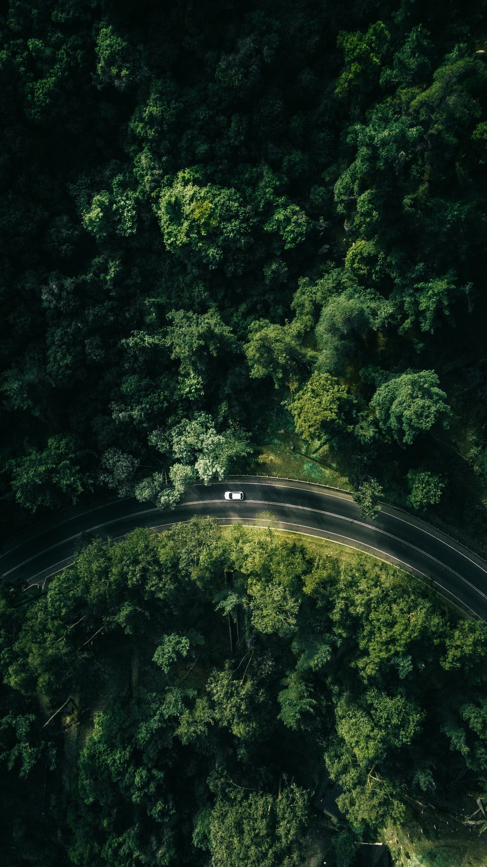 black and white road in the middle of green trees