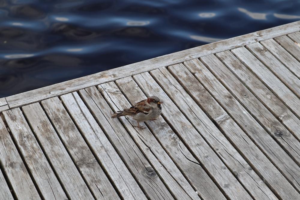 brown duck on wooden dock