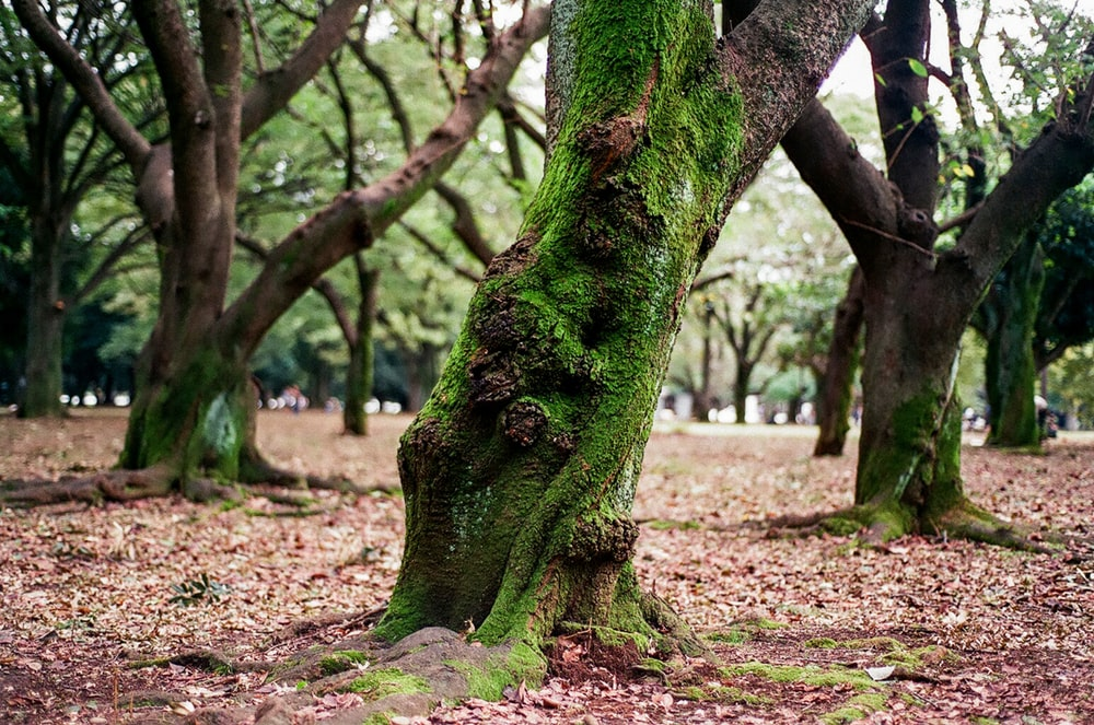 green tree trunk on brown soil