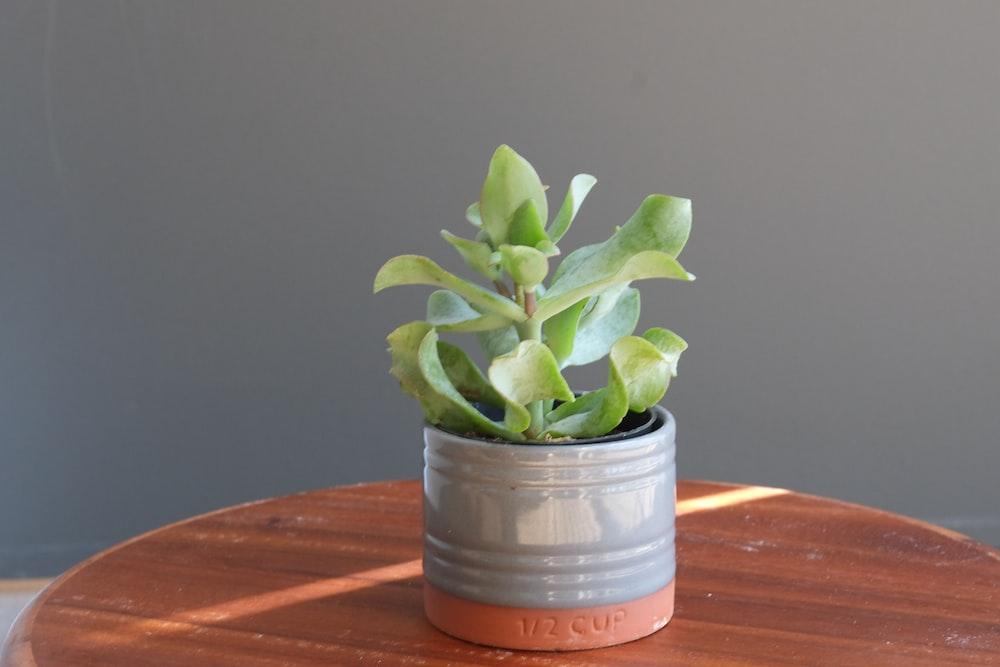 green plant in gray ceramic pot