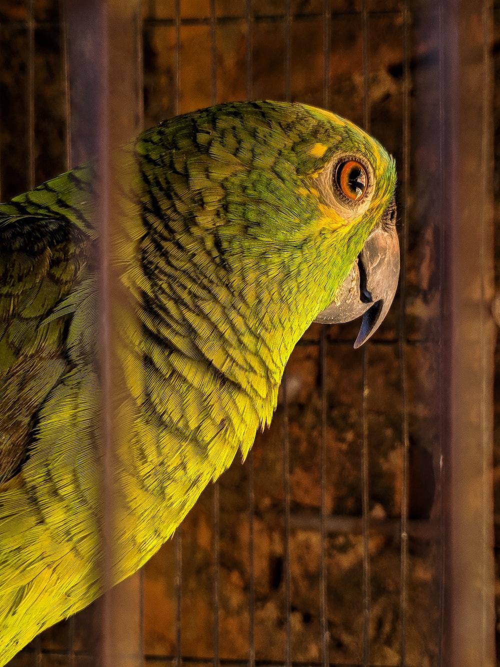 green bird in black cage