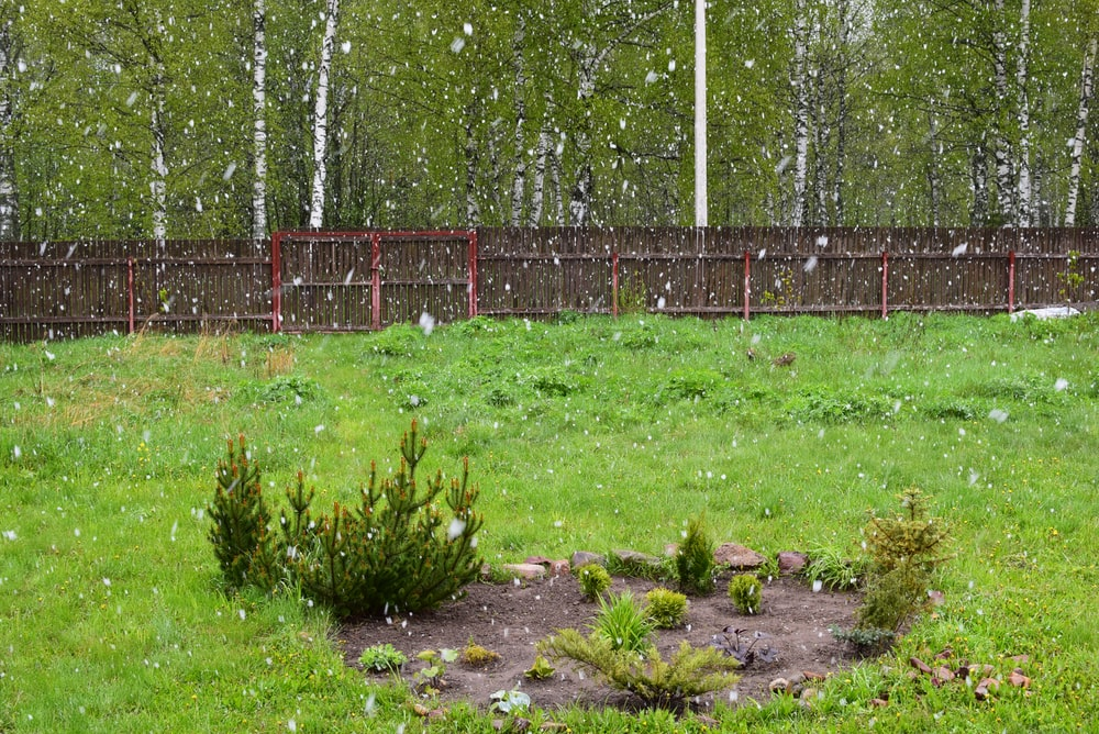 green grass near gray metal fence during daytime