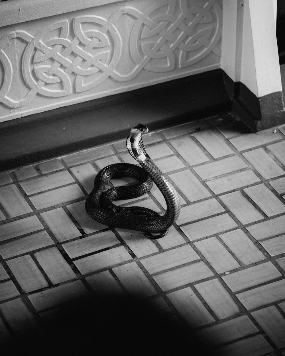 black and white snake on gray concrete floor