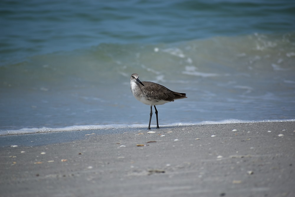 white and brown bird on beach shore during daytime