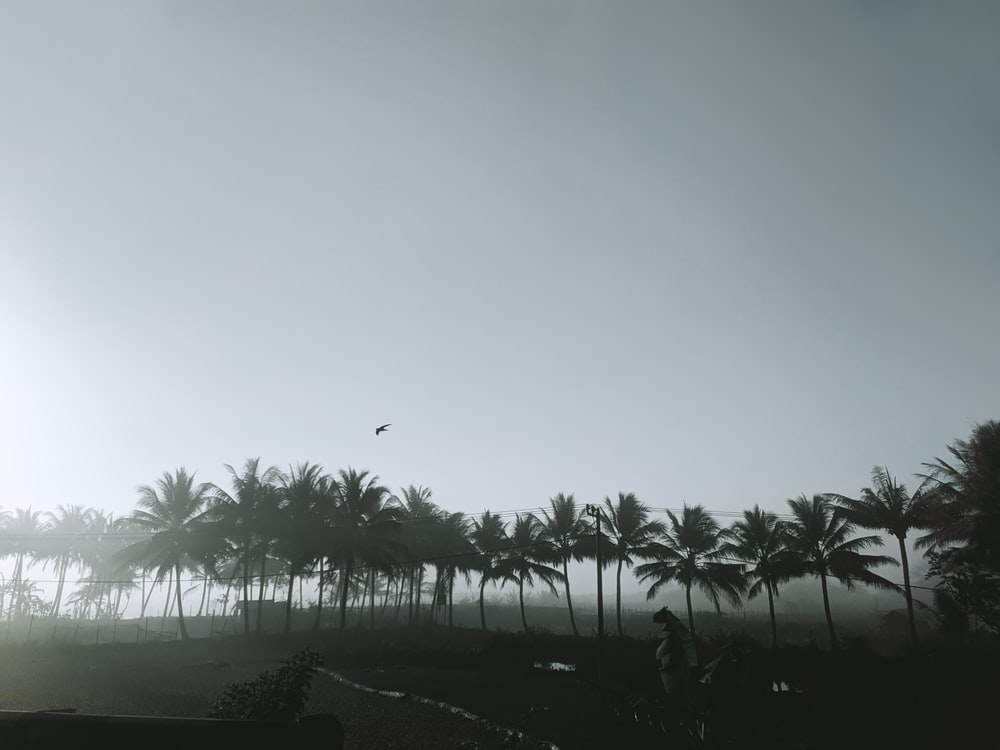 palm trees under gray sky