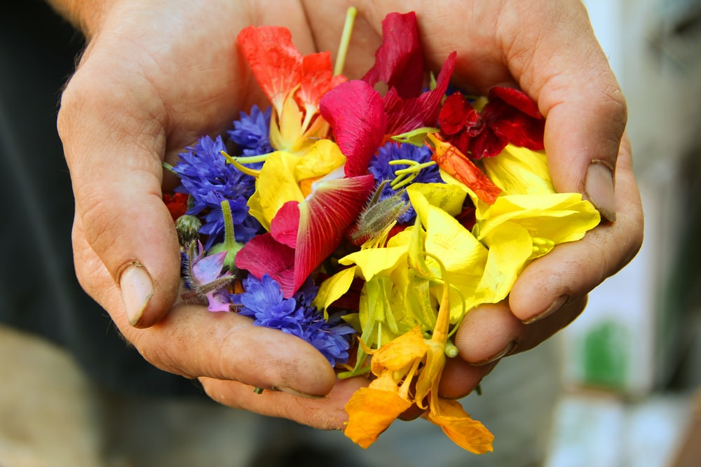 yellow blue and red flower petals on persons hand