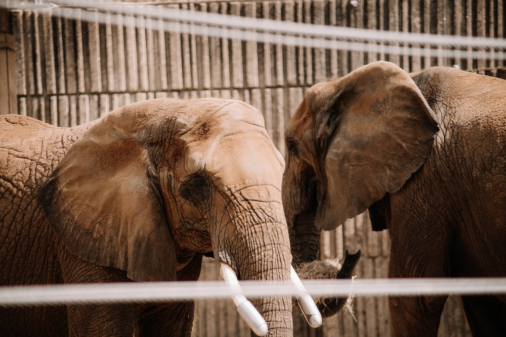 elephant drinking water from a white metal fence