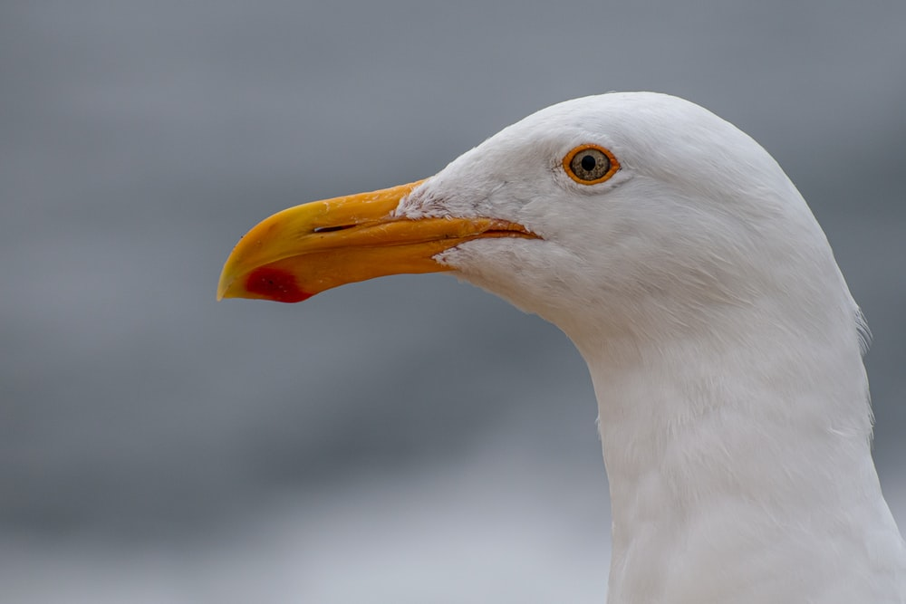 white gull in close up photography
