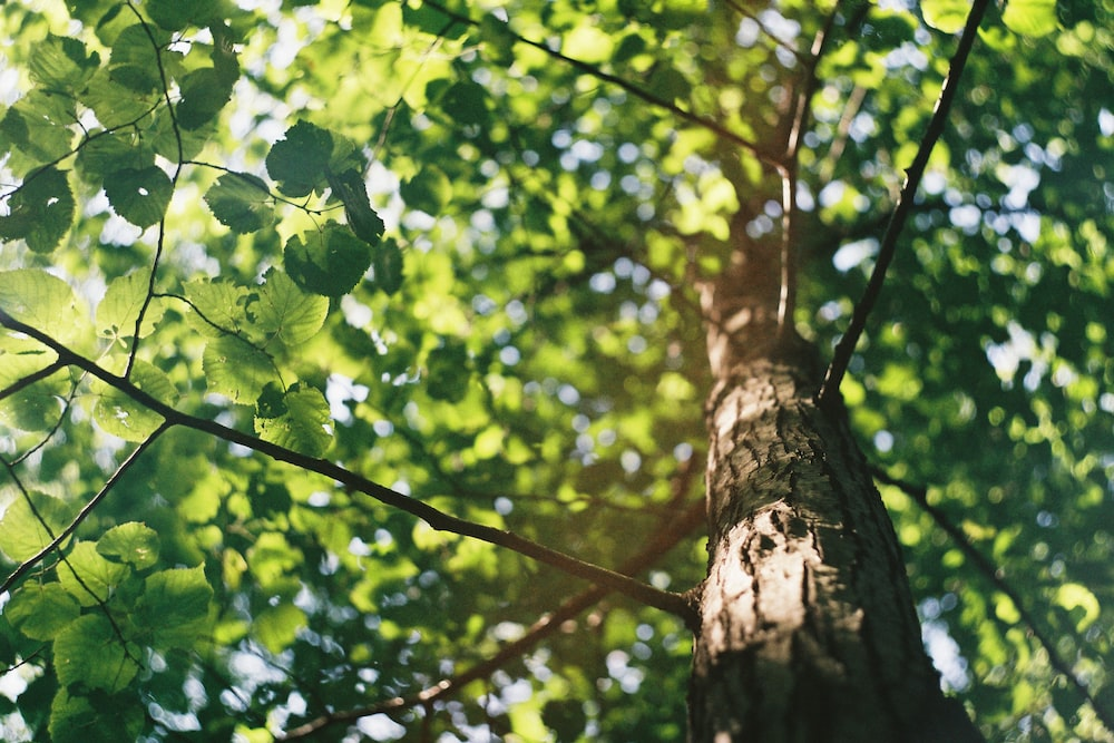 green leaves on brown tree branch during daytime