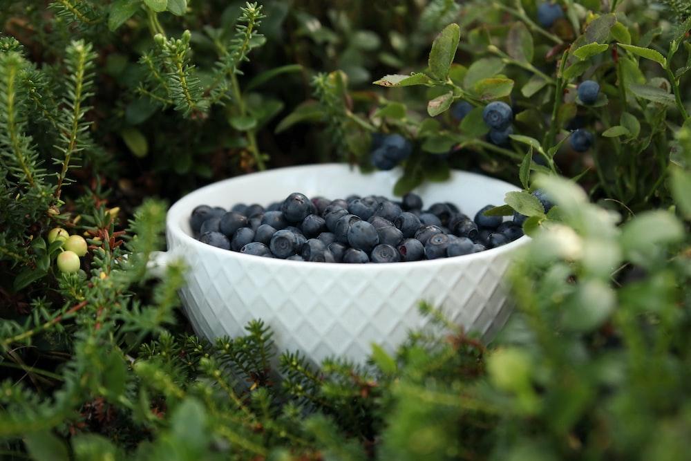 blue berries in white ceramic bowl