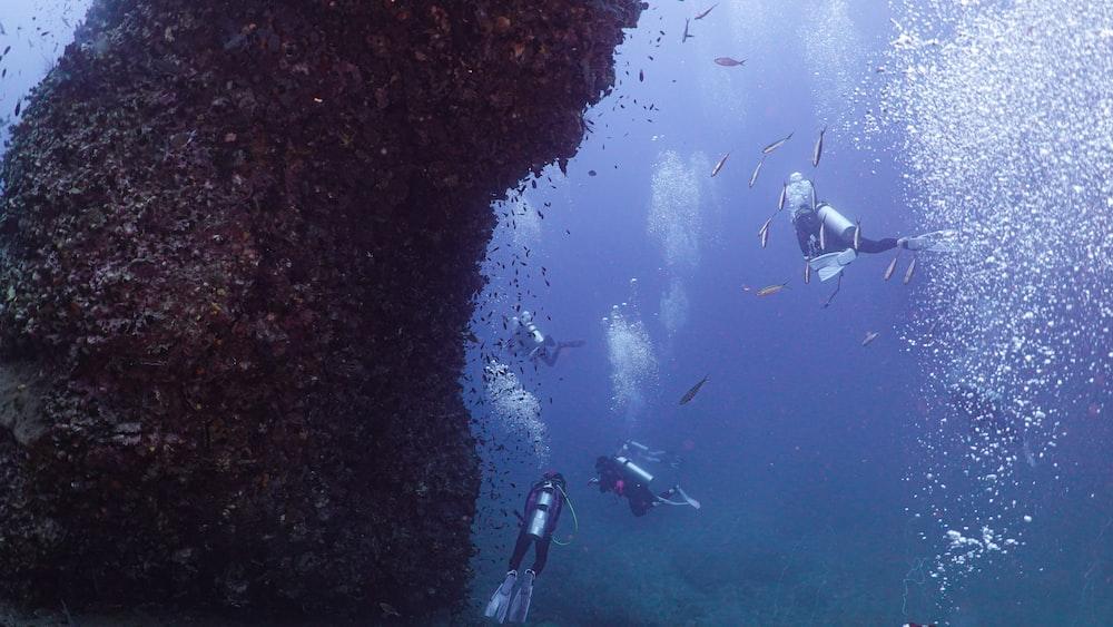 school of fish in water