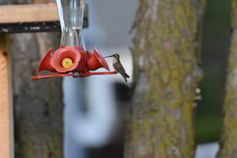 red and green bird feeder