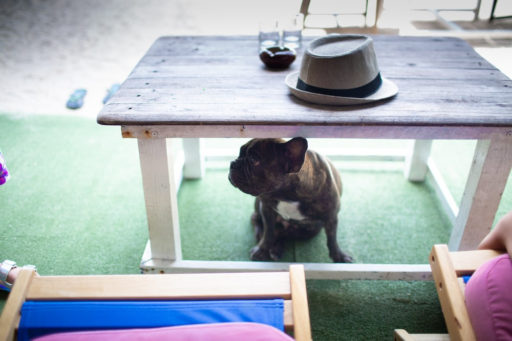brown and white short coated dog on brown wooden table