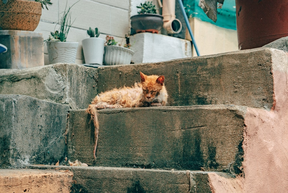 orange tabby cat lying on concrete wall during daytime