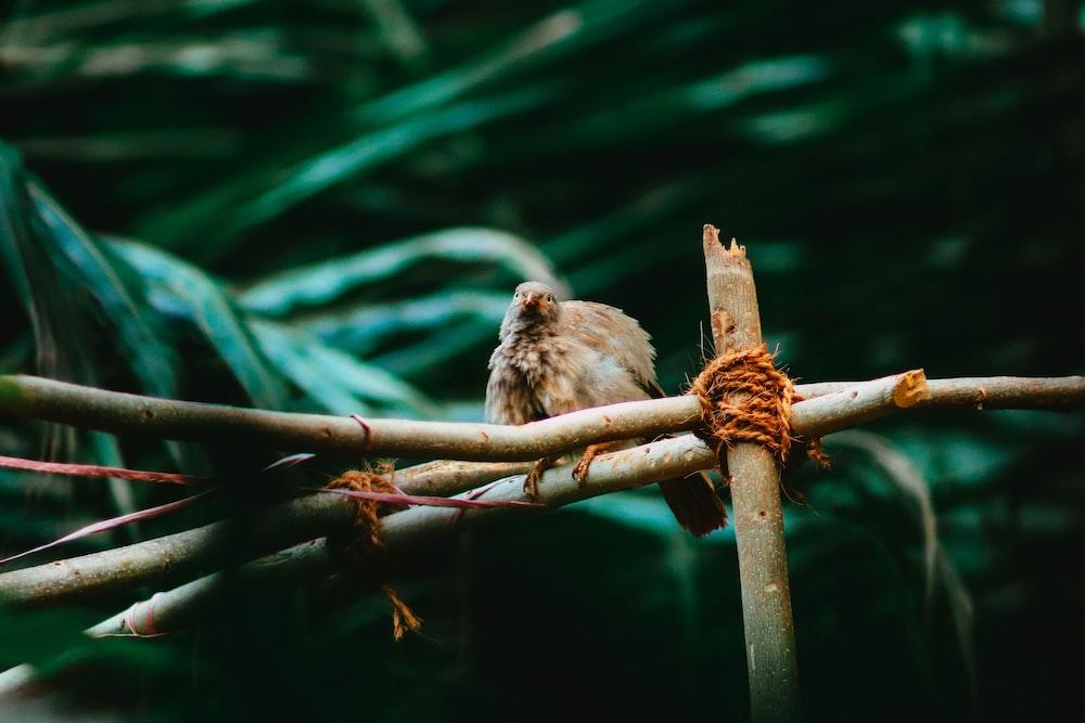 brown bird on brown tree branch