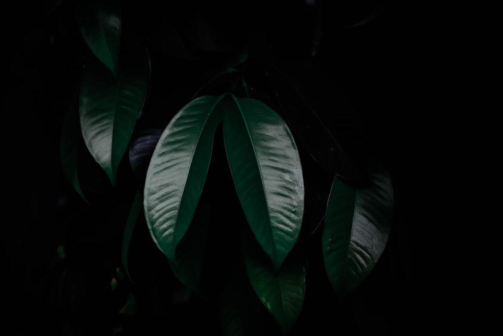 green leaves in dark room