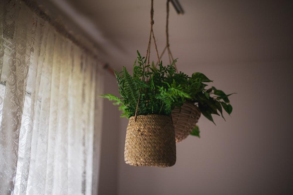green plant on brown wicker pot