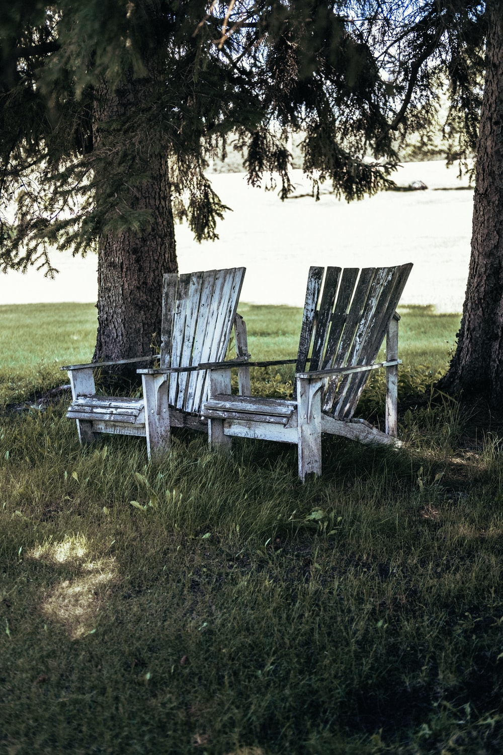 white wooden bench on green grass field near brown tree during daytime