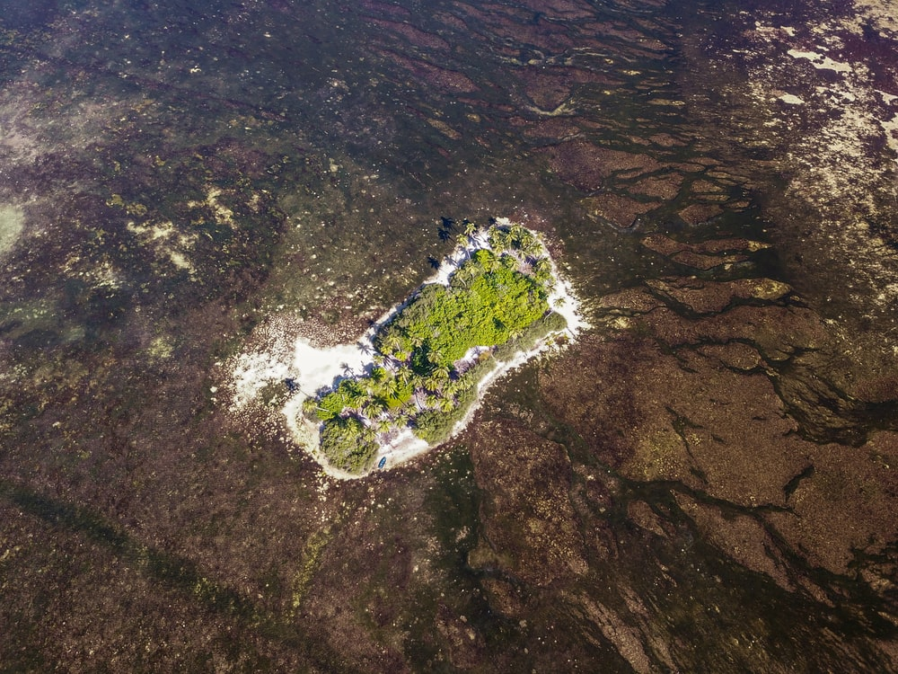 aerial view of green trees on brown rocky mountain during daytime