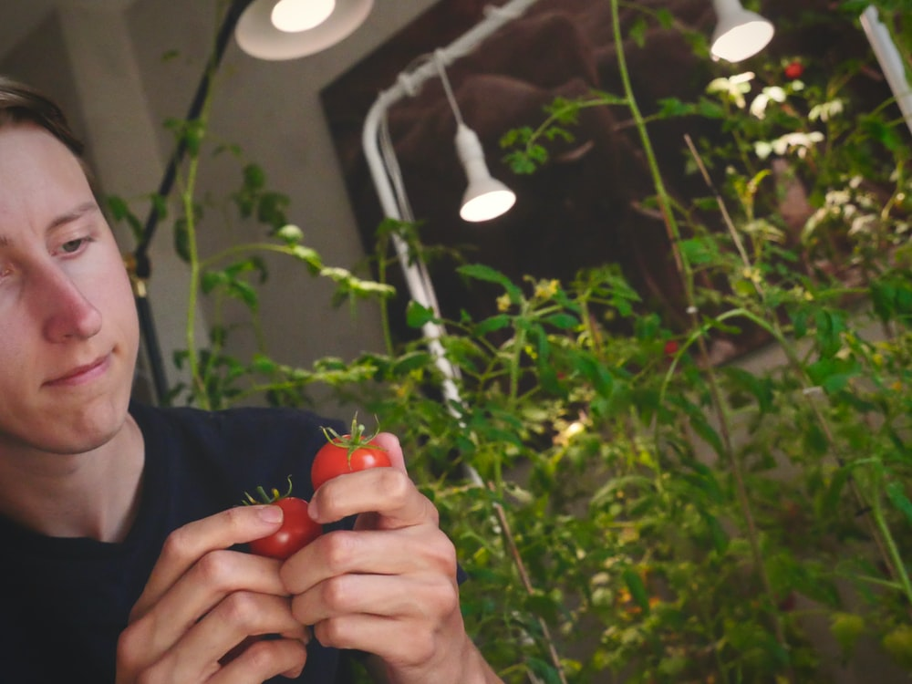 person holding red fruit with green leaves