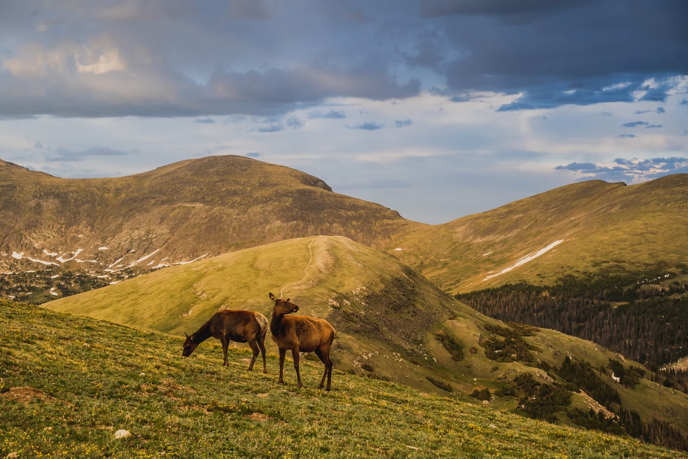 brown horse on green grass field near mountain under white clouds and blue sky during daytime